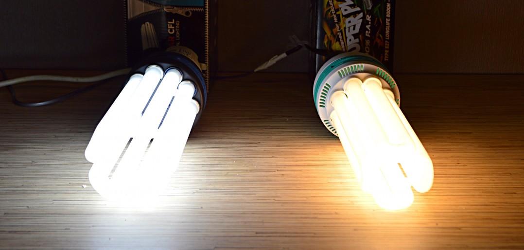 Autoflower CFL Growing