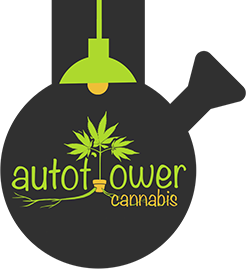 Autoflowering Cannabis Blog